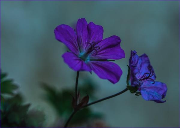 blue two... by estonian