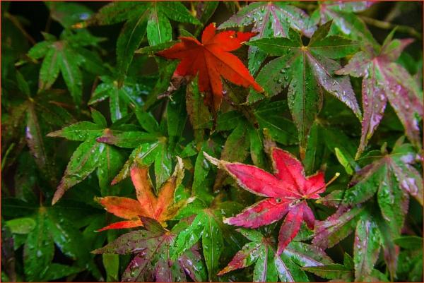 turning autumnal... by estonian