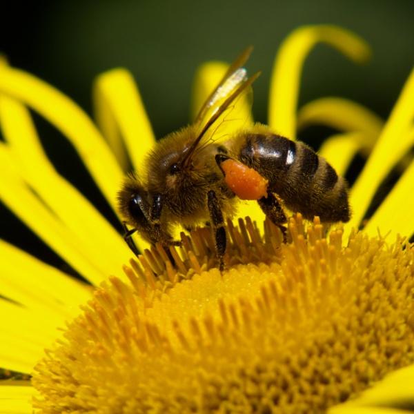 Pollen Monster by Backabit
