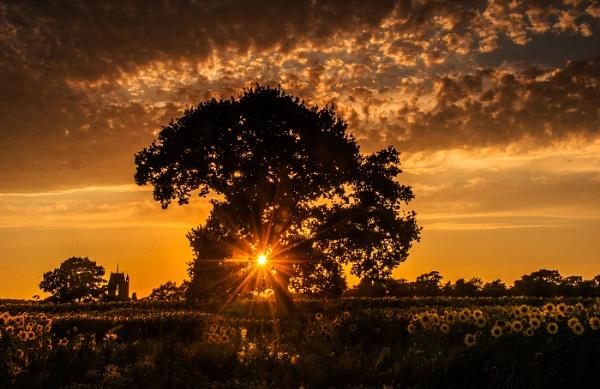 Sunset starburst by dven