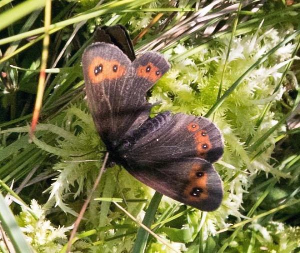 Butterfly. by Adrian57