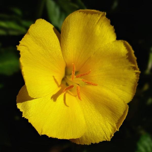 Yellow Flower by WestCamera