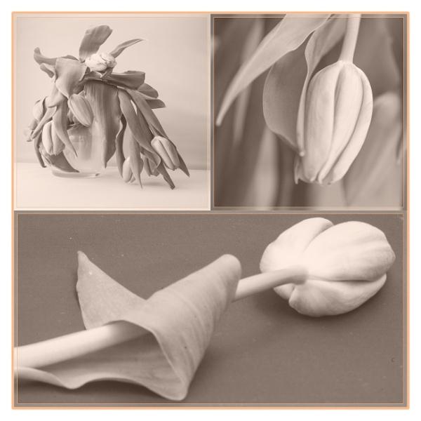 Tulip panel by SueB277