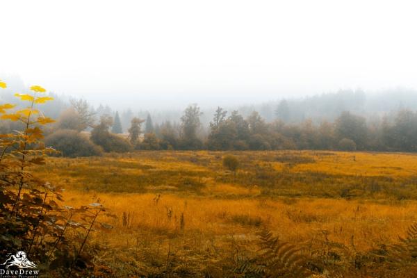 Golden Grasses by DADREW