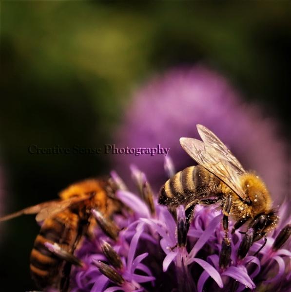 Bees by CreativeSensePhotography
