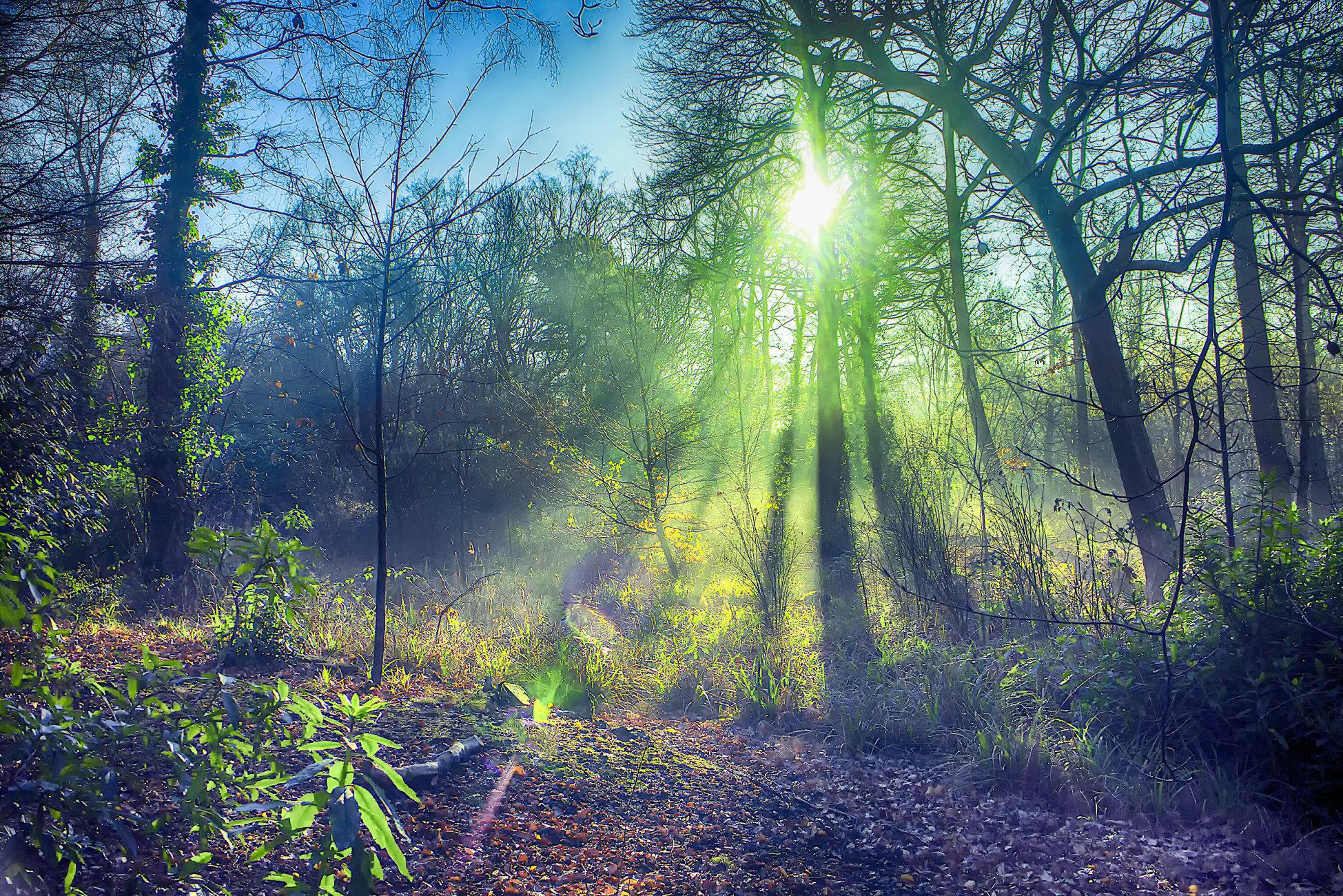taken in 100 acres wood Wickham, hampshire