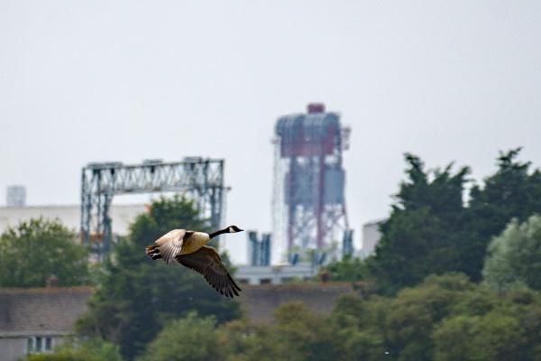 Industrial Goose by terra
