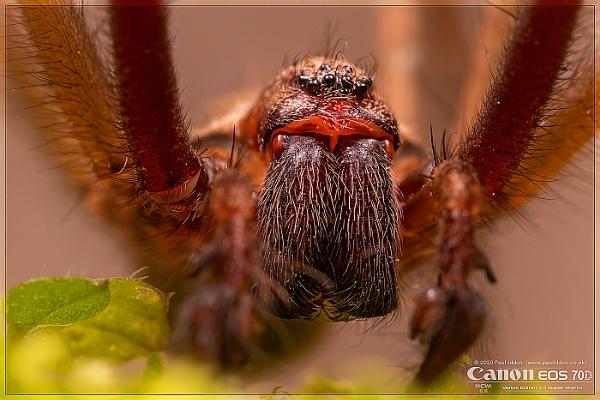 Arachnid by Paul_Iddon