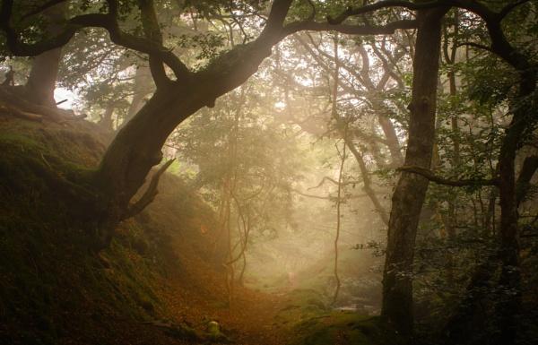 Season of Mists by Brenty