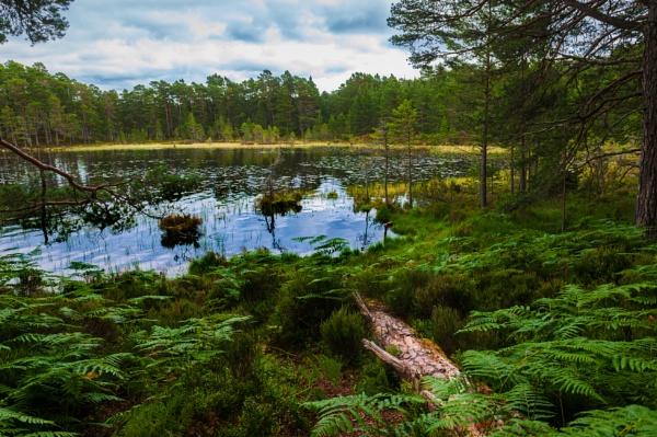 Woodland Walk 6 by scrimmy