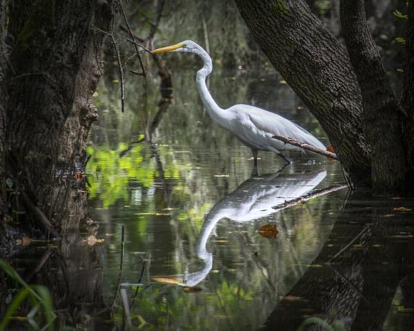 Egret by jbsaladino