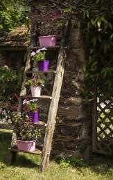 Lilac Ladder
