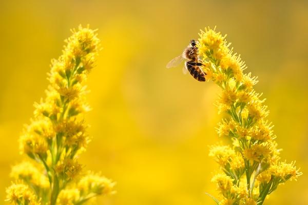 Feeding Honey Bee by BydoR9