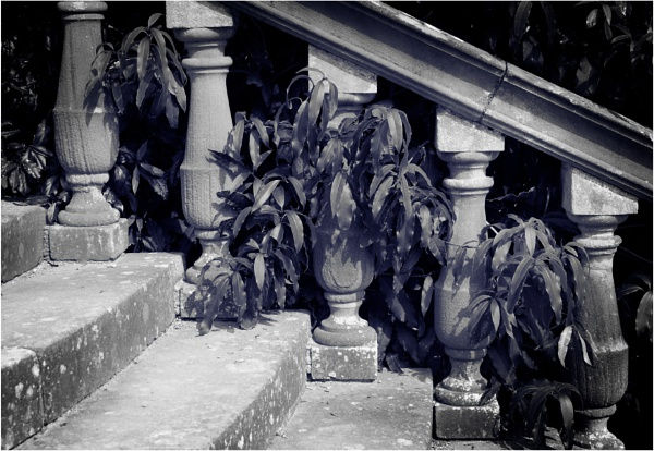Balustrade and Leaves by dark_lord
