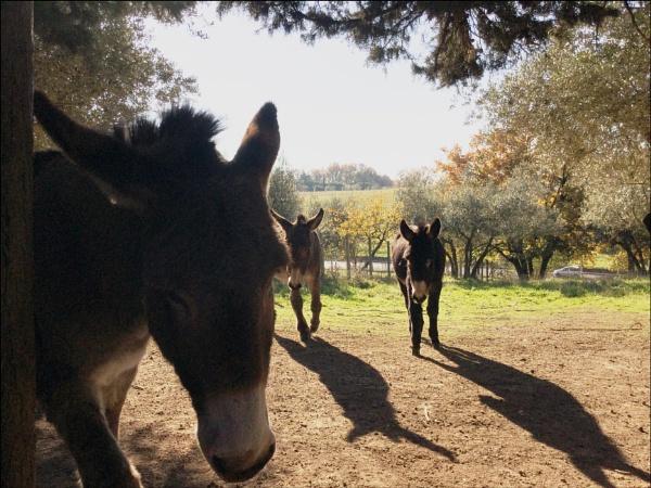 donkey shadows! by laura1
