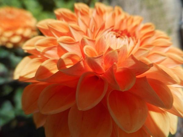 orange  beauty by jenny007