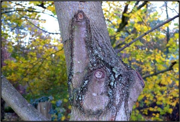 the prick-tree by FabioKeiner