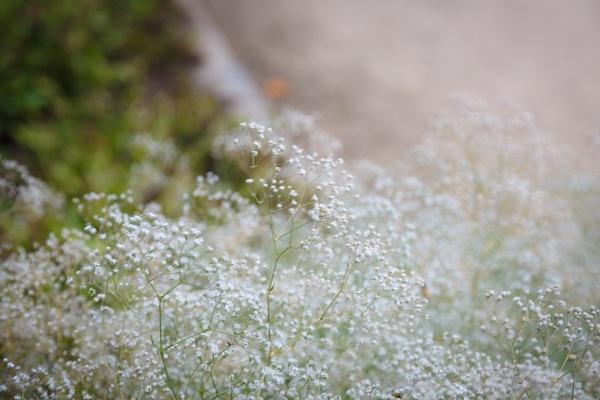 Blooming flower in the garden by rninov