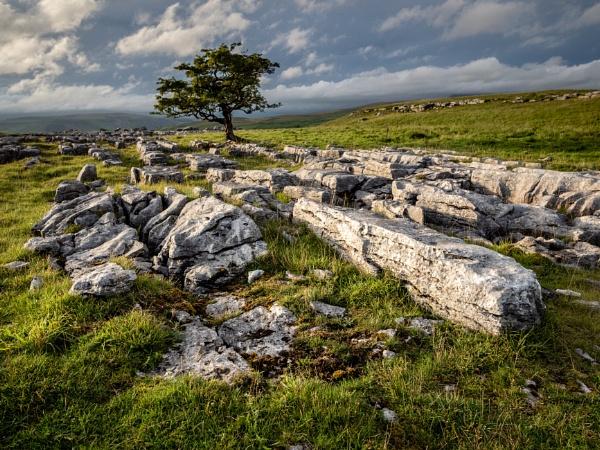Winskill Tree by Skyerocket