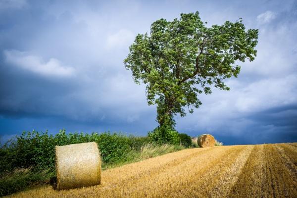 Harvest Time by Billdad