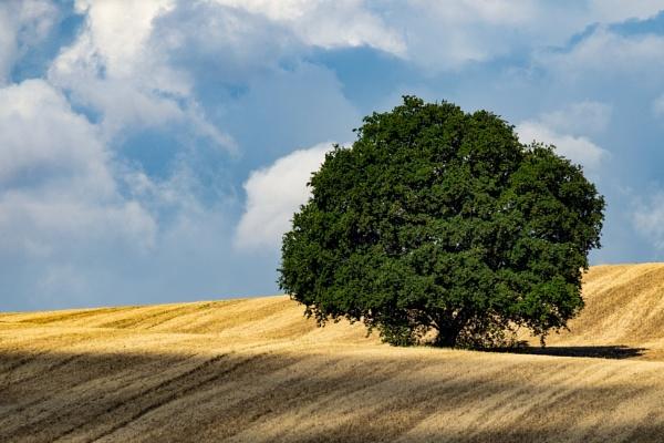 Tree across the field by DougalDogPhotos