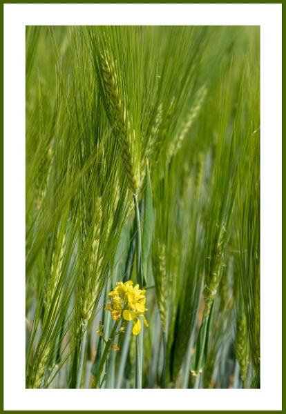Grain by kw