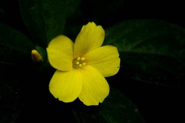 Flower in darkness by GokulRajendran234