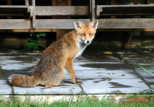 visitor to my garden by derekd