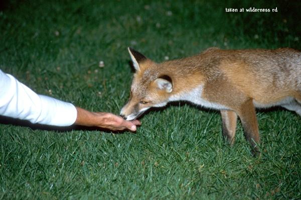 fox again by derekd