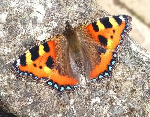 Butterfly by kelvin7