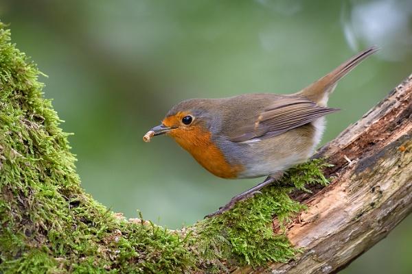 Feeding Robin by BydoR9