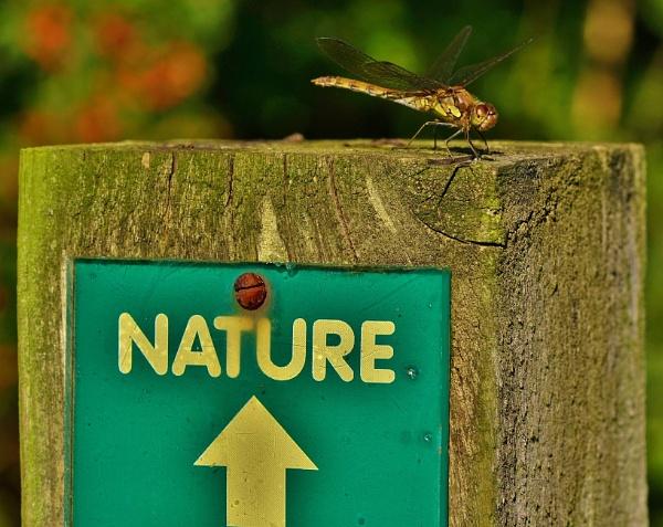 Nature by georgiepoolie