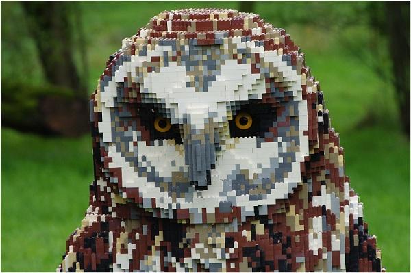 A Very Strange Owl by johnriley1uk