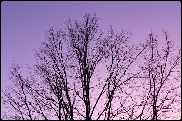 bare branching by FabioKeiner