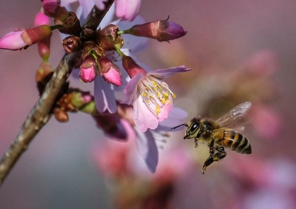 Springtime by Prizm