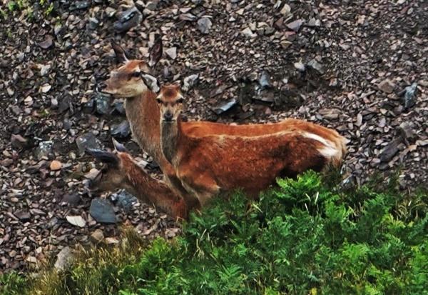 Oh deer, oh deer, oh deer. by frogs123
