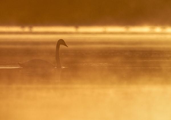 Misty morning by hannukon
