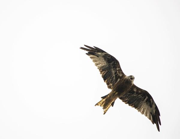 High as a Kite by AnnetteK