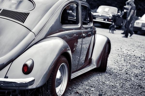 Beetle beauty by icipix