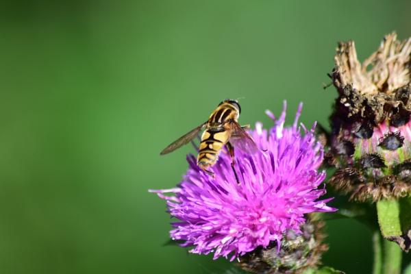 Pollen Hit by Clyde54