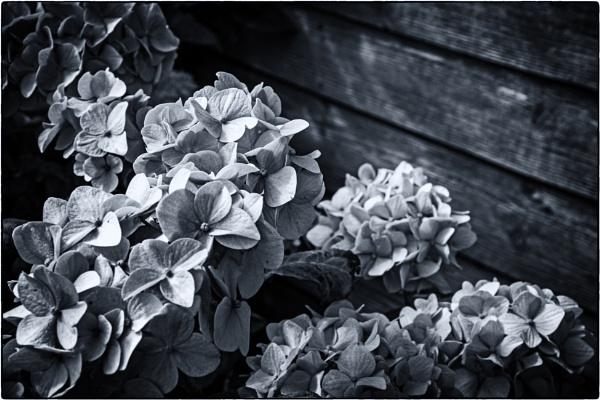 Fliss\'s garden 2 by mrswoolybill