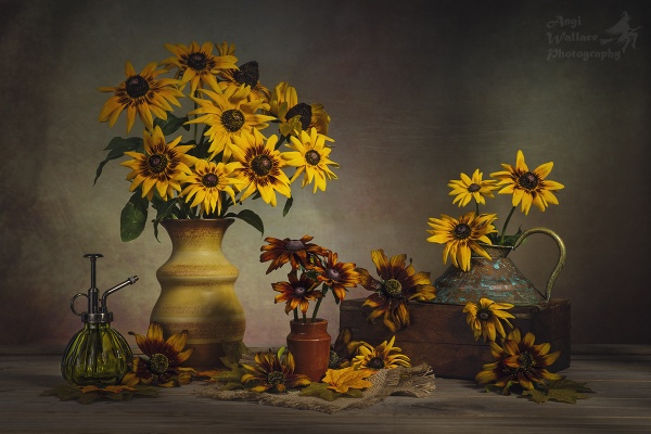 Rudbeckia by Angi_Wallace