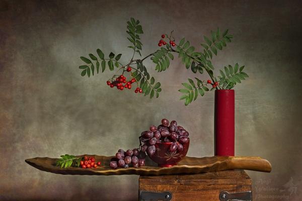 Rowan berries by Angi_Wallace