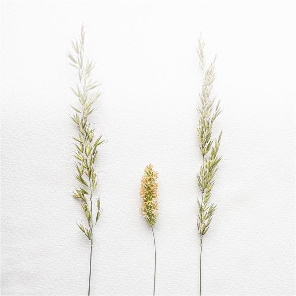 FADING GRASSES by judidicks