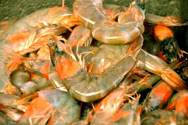 Seafood bonanza !! by Chinga