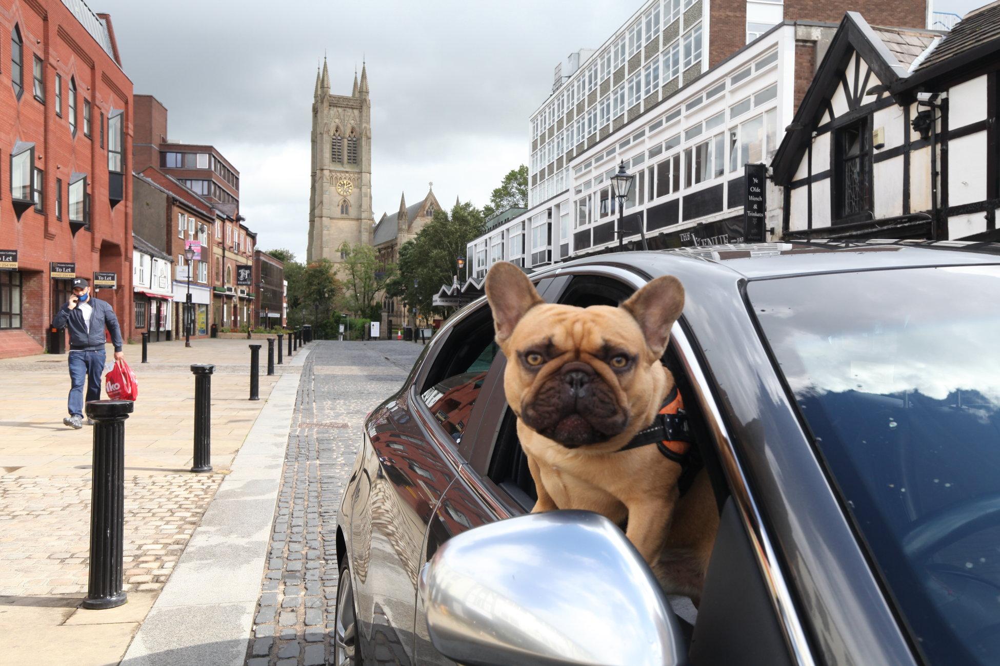 Dog in Bolton in the middle of Coronavirus lockdown