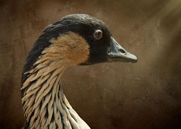 Portrait of a Duck II by Bzox