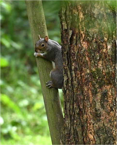 Squirrel by johnriley1uk