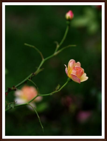 Sweet Dream ...... 3 by Mollycat