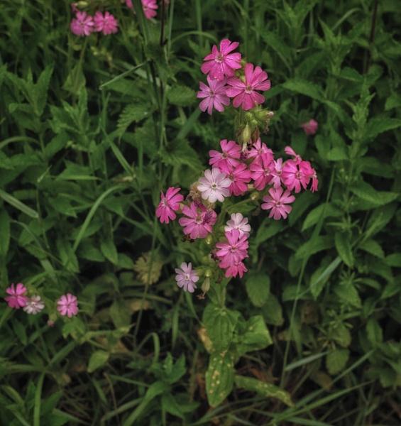 Weeds Never Die by BillRookery